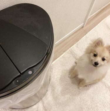 【ペット臭い対策】自動開閉センサーゴミ箱DiETZ(ディーツ)を使い込んでレビュー